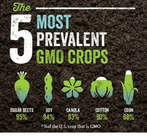 the-most-prevalent-gmo-crops-sugar-beets-soycanola-cotton-corn-24819319.png