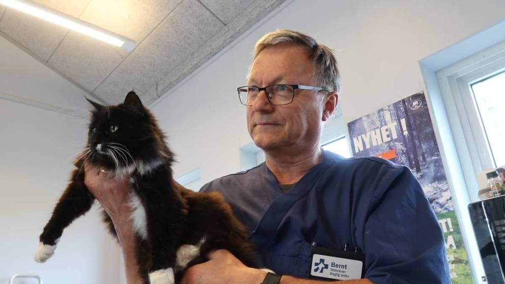 El veterinario Bernt Lande se dirige a las personas que quieren matar animales sanos. Aquí con el gato Muscat, que fue adoptado como regalón de la clínica en lugar de quitarle la vida. Lande adoptó al gato Muscat cuando iba a ser sacrificado. Ya está cansado de que la gente quiera 'despachar' a sus animales que no tienen nada.